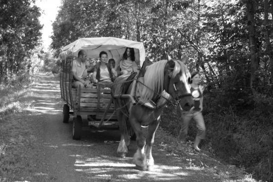 Promenade en chariot sur la voie vertes.