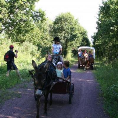 Randonnées attelée à cheval et en ânes