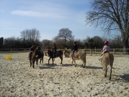 Equitation ânes