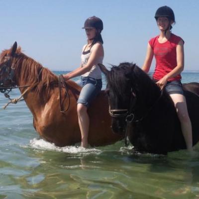 le bain avec les chevaux