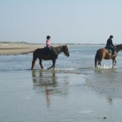 Bain à la mer avec les chevaux  2 éme jours