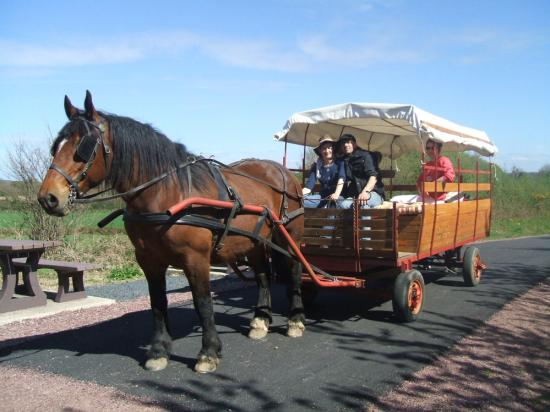 Randonnée Attelage chevaux