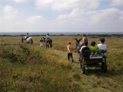 promenades en libre avec ânes attelés et montés