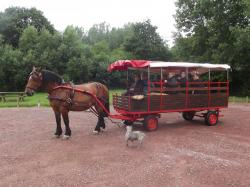 ATTELAGE CHARIOT 20 PERSONNES