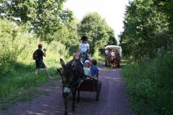 promenade attelée en âne avec sulky  et  en chariot baché tiré par un cob Normand