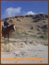 Dunes de Surville