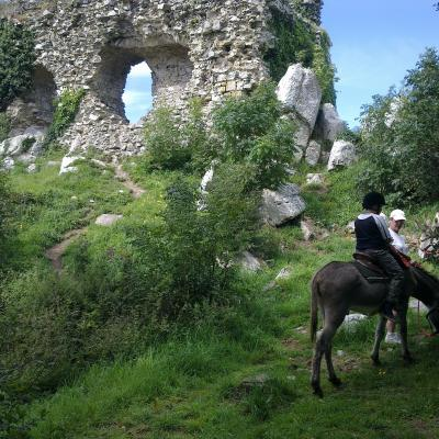 Promenades  Mont Castre montées et attelées