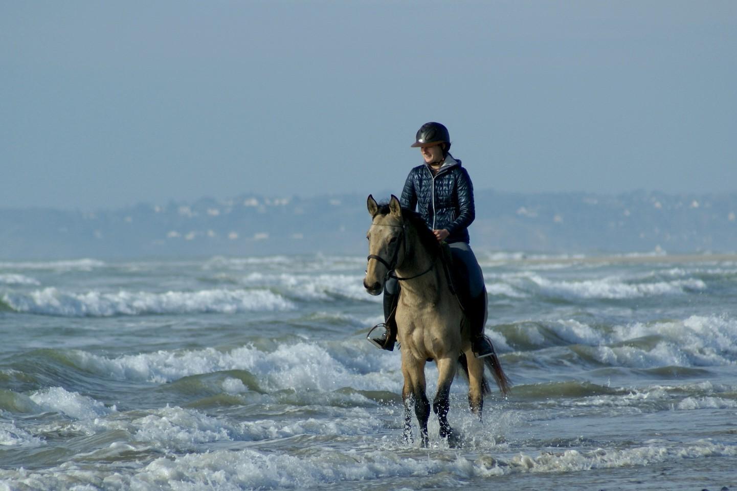 trot dans l'eau face aux vagues
