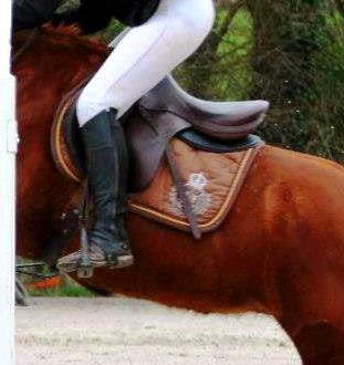 Cours/stages équitation et attelage