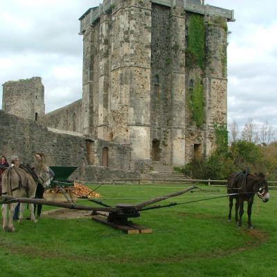 Pressage des pommes avec les ânes pour faire du cidre a l'ancienne.