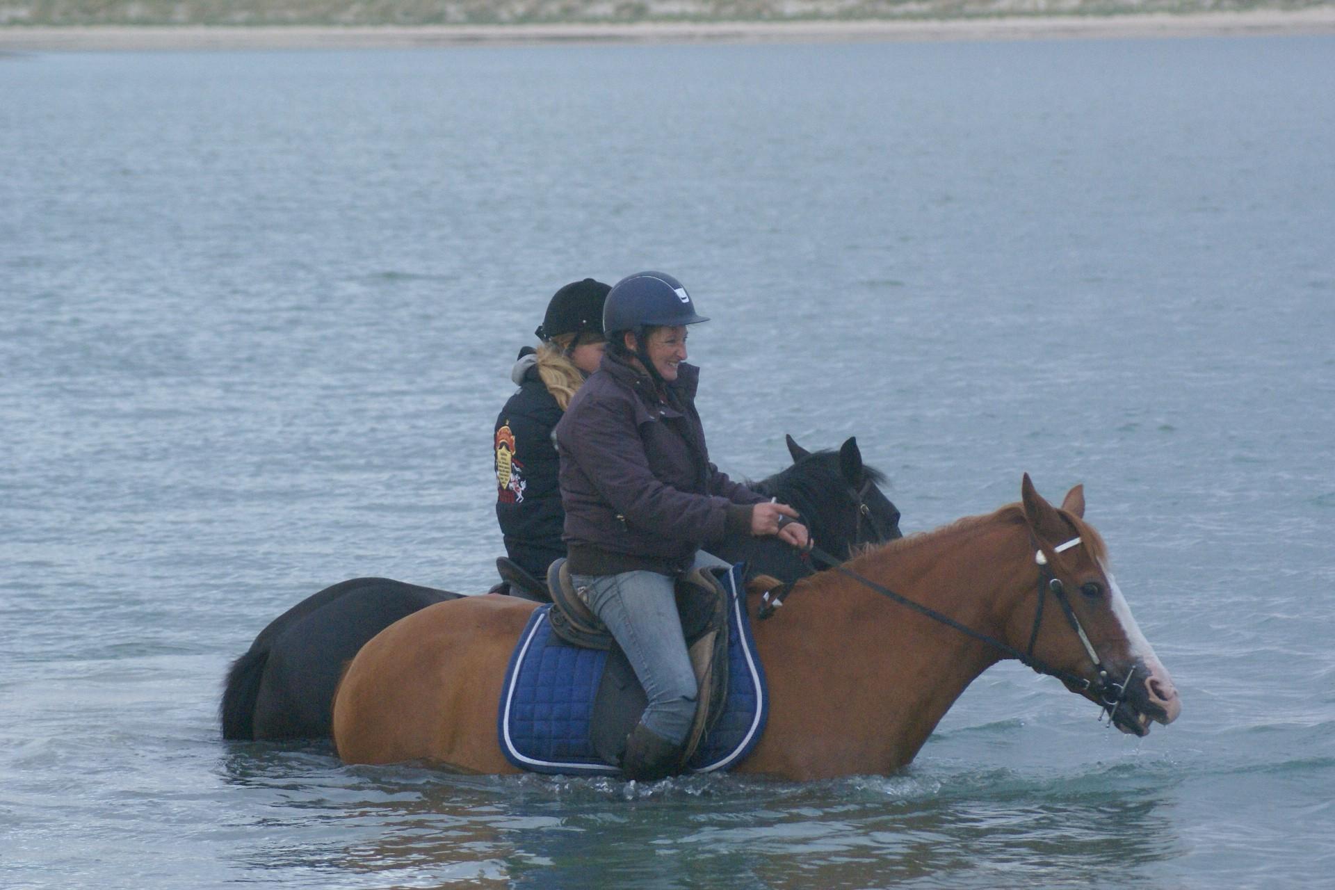 Bain avec les chevaux dans le havre