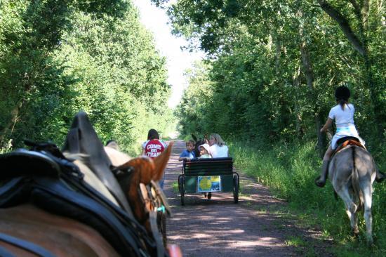 Promenades équestres montées et attelées à cheval et poneys, en ânes