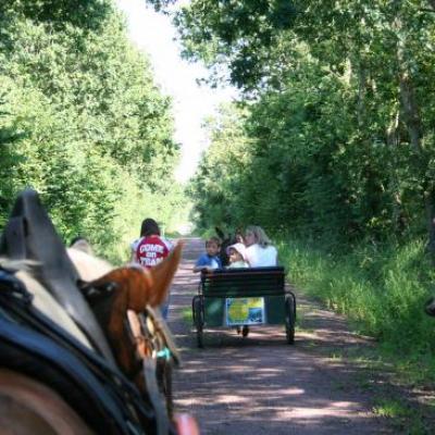 Promenades voie verte montées et attelées
