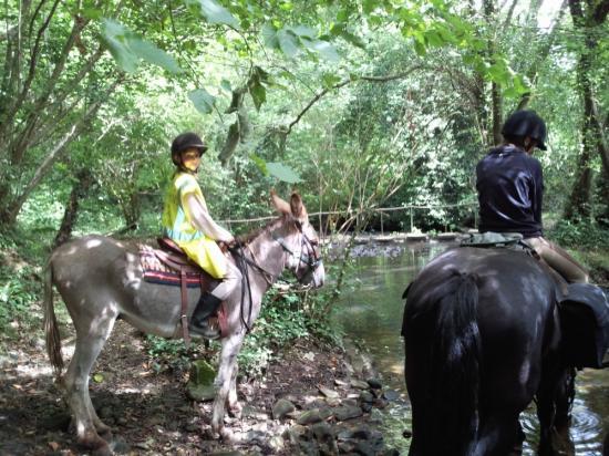 Rivière ou les chevaux s'abreuvent sur notre route.