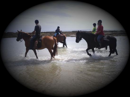 Bain avec les chevaux 1 er jour