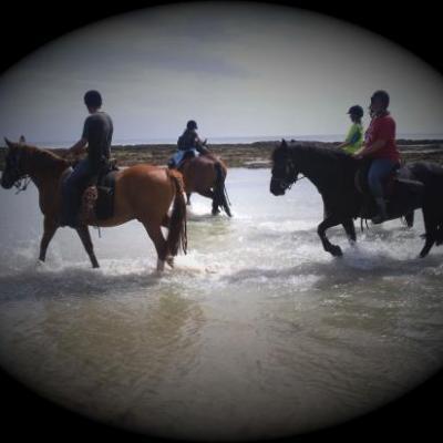 Bain à la mer avec les chevaux.