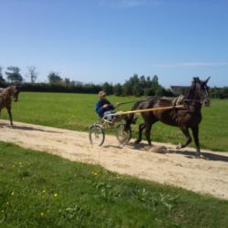 Entrainement des chevaux de Régis le propriétaire du château