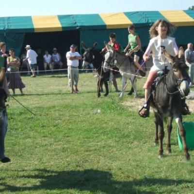 Course en ânes à la fête de l'âne à St George la Rivière