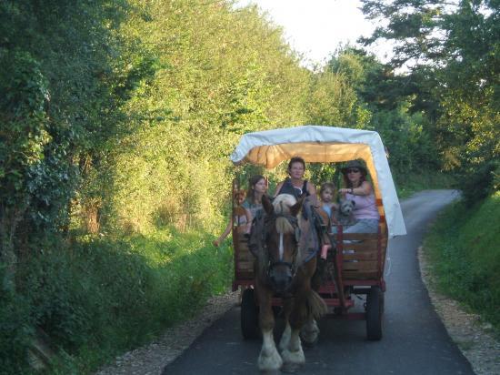 Randonnées en chariot western à cheval.