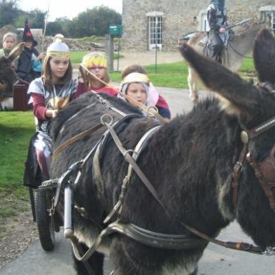 Rallyes, jeux équestre, tournois, soins des ânons, randonnées à cheval et en ânes