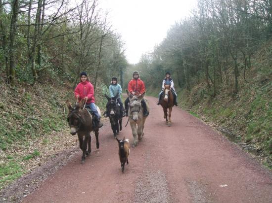 Randonnées montées à cheval et en ânes