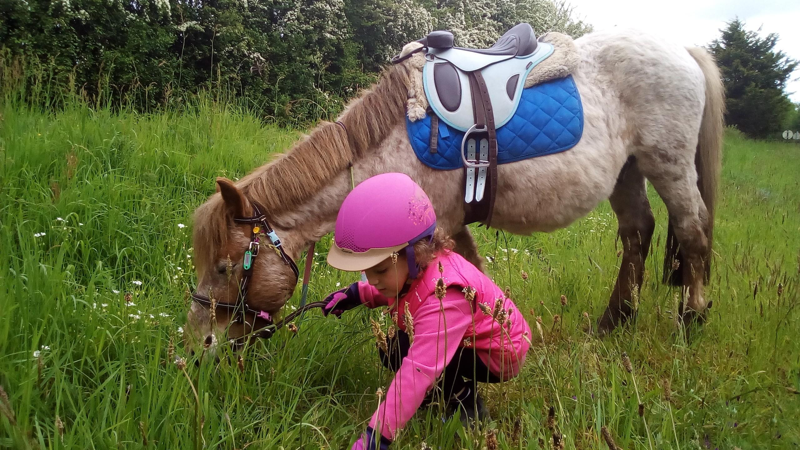 poney monté