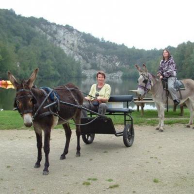 Promenades libre avec shetlands montés et ânes attelés