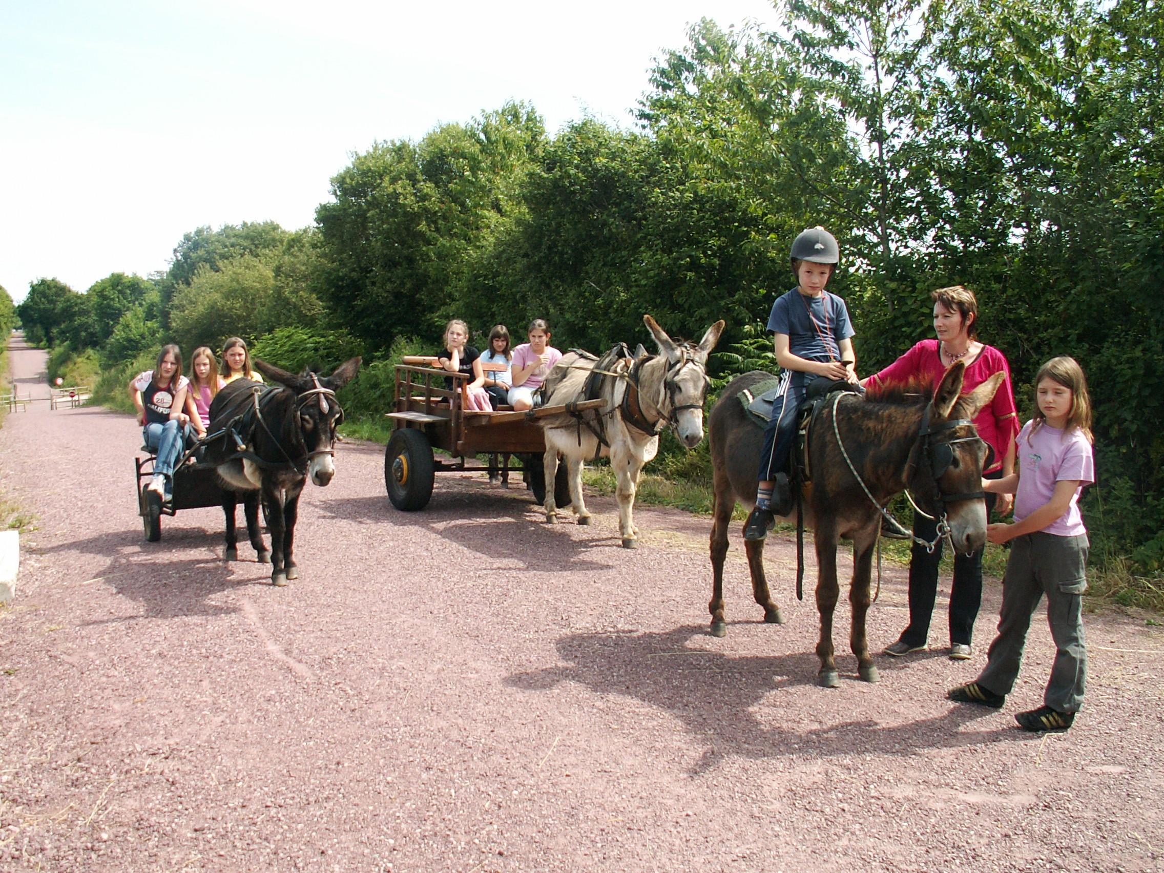 attelage et monté ânes sur les voies verte
