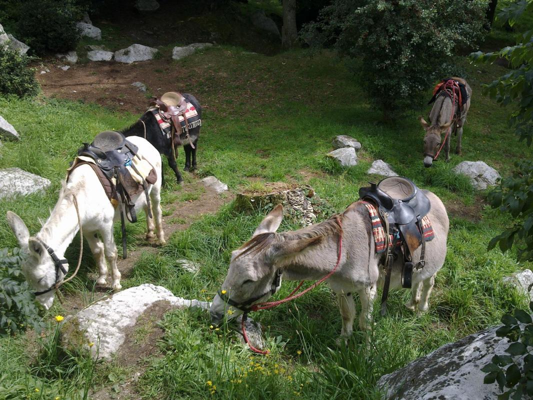 nos ânes au gouter