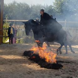 Cours/stages Dressages spectacles equestres; passage dans le feu.