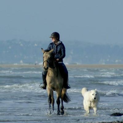promenades équestres accompagnées