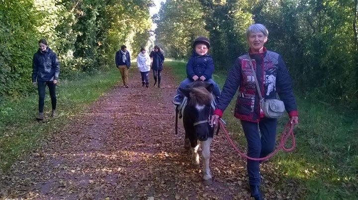 Promenades  libre avec poneys sur les voies verte