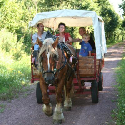 promenades attelage chariot tiré par un cob normand