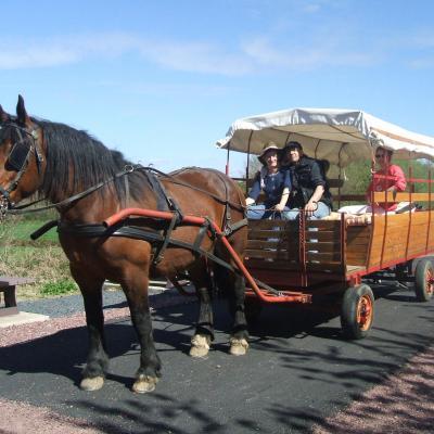 attelage chariot tiré par un cob normand
